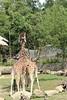 Jihlava zoo by Micka-R