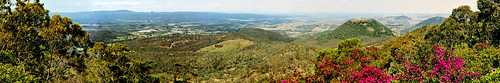 flowers 1995 tabletop panorama hill 90s jeffc aussiejeff mountain tree qld queensland toowoomba australia