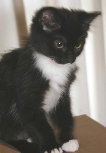 WiShe Kitten Today by Chriss Pagani