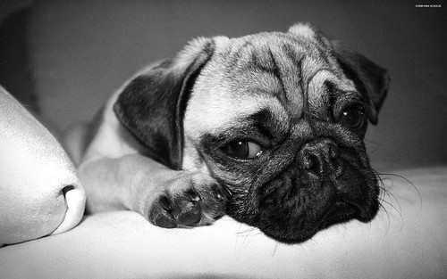 Sad Dog | by panli54