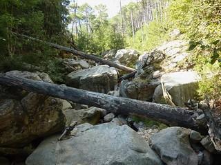 :Partie de la montée avec gros blocs rocheux et arbres en travers