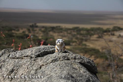 Spanky Serengeti | by adamkiefer2