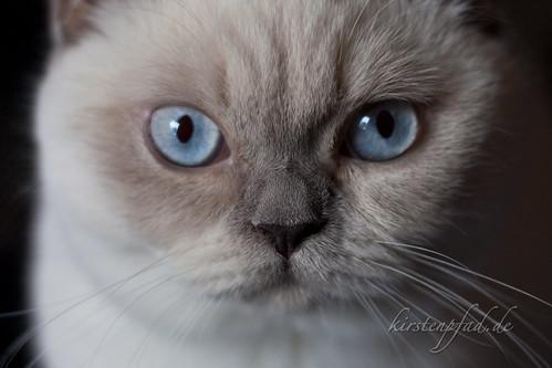 Amys blaue Augen   by Blueturtles_