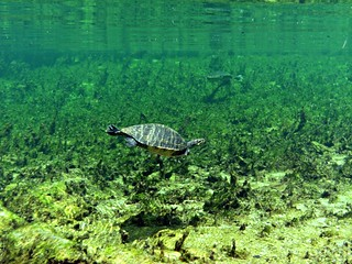 Troy Springs State Park: Yield to Turtles | by Phil's 1stPix