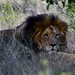 África do Sul - Safari by Fabio Favaro