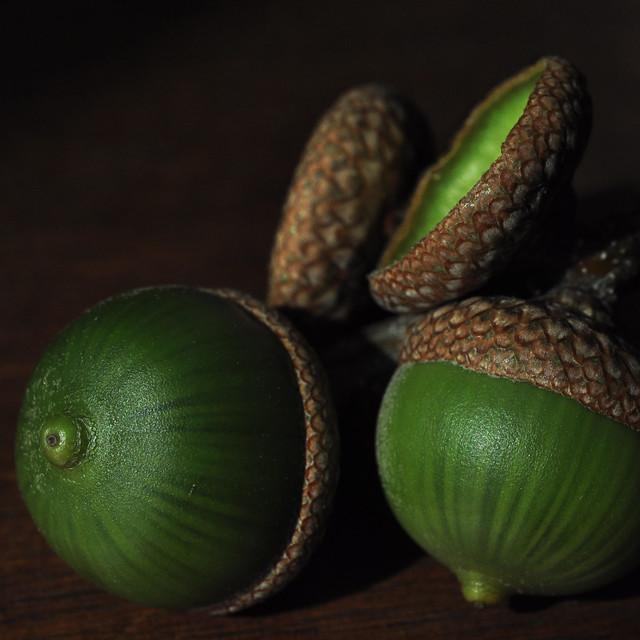 Fresh acorns