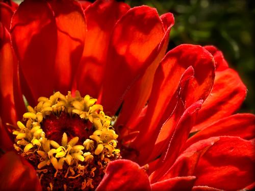 red orange yellow flora ngc mywinners 101010