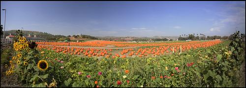 california autumn canon pumpkin outdoors pumpkins autumncolors socal pomona canondslr calpoly inlandempire calpolypomona kenszok afhht