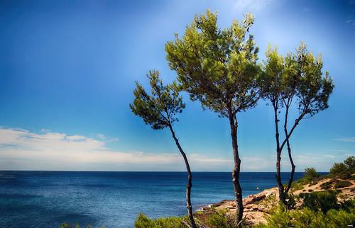 mar montaña pinos arboles cielo nubes airelibre agua naturaleza nature sonya77 paisaje landscape