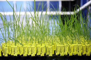 Crop Design - The fine art of gene discovery | by BASF - We create chemistry