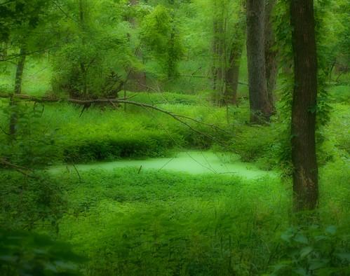 green river walk michigan july lansing lush