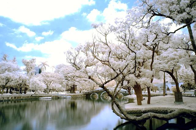 in Taiwan Taichung . 台灣台中 .Taichung Park IR 台中公園  IR紅外線攝影 DSC_8268