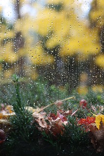 Celebrate Monday: Rainy Start (16)