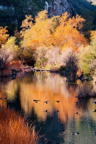 california trees fall water landscape losangeles nikon sycamore santamonicamountains d90 malibucreeksp yourphototips