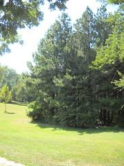 Taylor's Grove