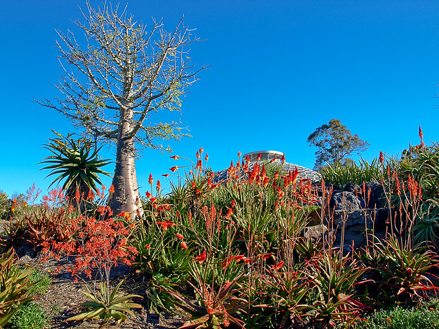 Arid Region Plants