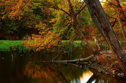 autumn reflection water canon landscape 50mm newjersey nj parks sigma 400d
