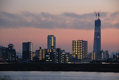 Buildings and Tokyo Sky Tree at Dusk