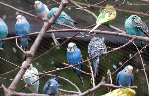 Blue Parakeet Tree | by Eric Kilby