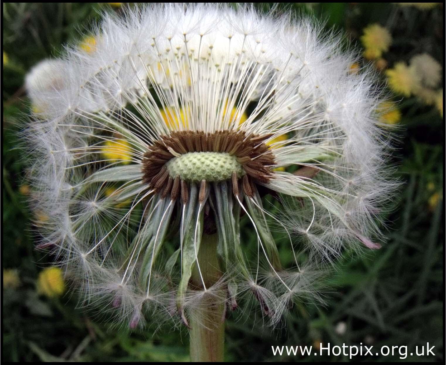 weed,wild,uk,england,english,flower,warrington,GB,nature,macro,close,up,closeup,tubes,tube,bellow,bellows,ColorPhotoAward,hotpix!