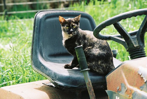Tortoise Shell Cat On A Tractor by Chriss Pagani