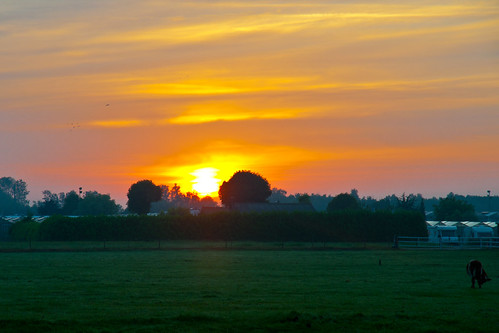bridge bird sunrise geotagged cow ferdi koe onmywaytowork zonsopkomst opwegnaarwerk ferdisworld opdescooter geo:lat=52089 geo:lon=4409208