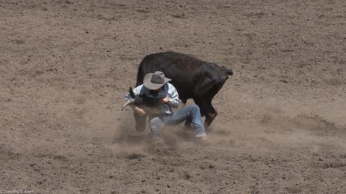 2017 calfiornia duncanmills riders rodeo russian river cowboy wrestling calf cow dirt hat jeans