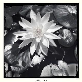 The Arboretum and Botanic Garden 061310Su | by vmiramontes