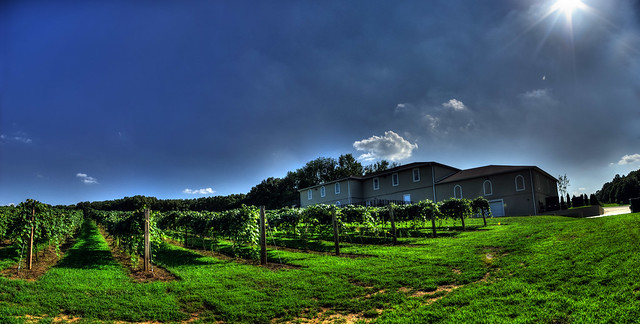 DelMonaco Winery and vinyards, Baxter, TN