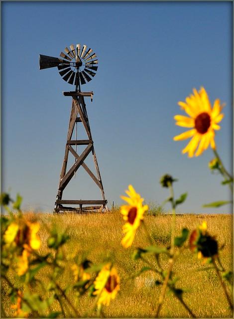 Windmill & Wildflowers