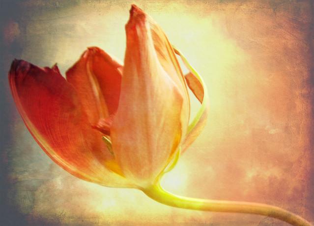 Wild & Wonderful Textured Tulip!