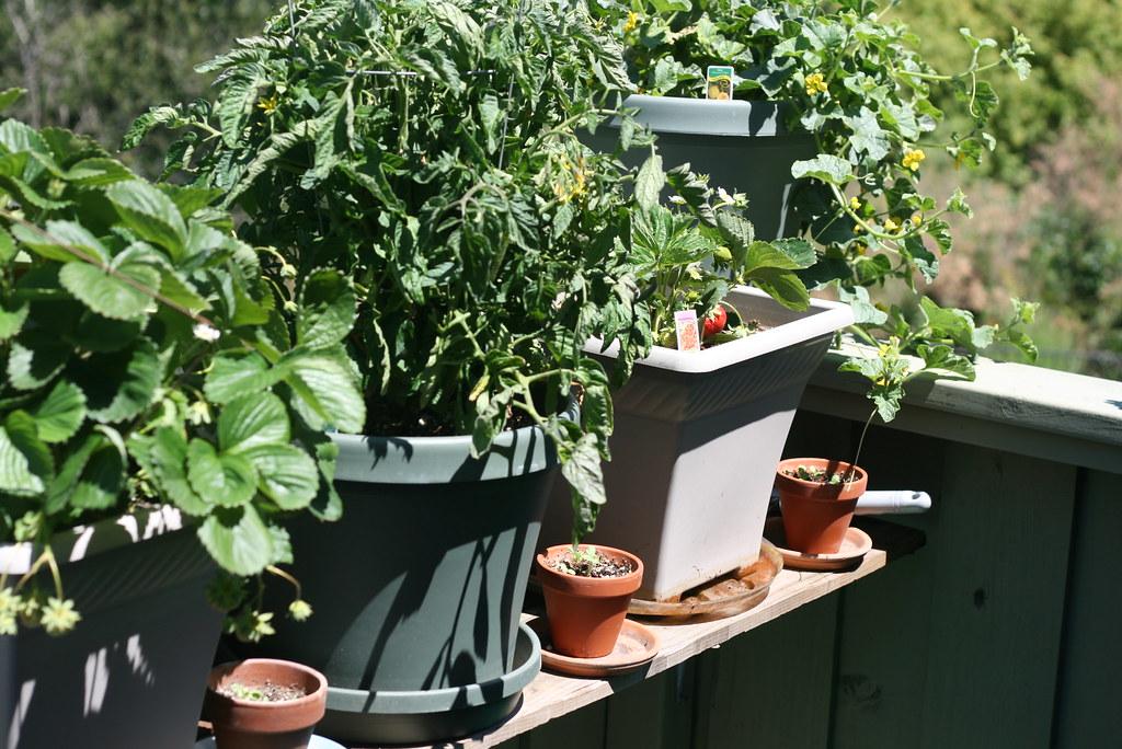 Apartment Garden Balcony Vegetables