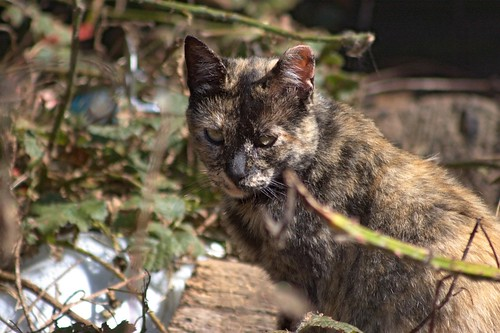 Tortie In The Grass by Chriss Pagani