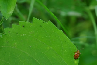 Bug | by [Pradeep]