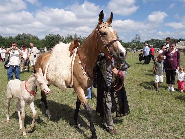 Мадьярские лошади