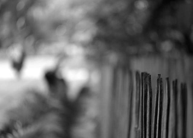 Rural fence | Bilar Town, Bohol, Philippines