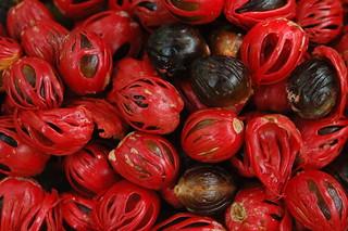 Nutmeg & Mace | by Yogita Mehra
