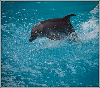 Dolphin [P6262297-156-1] | by RC_Fotos