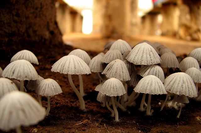 Fungi adorning the ground