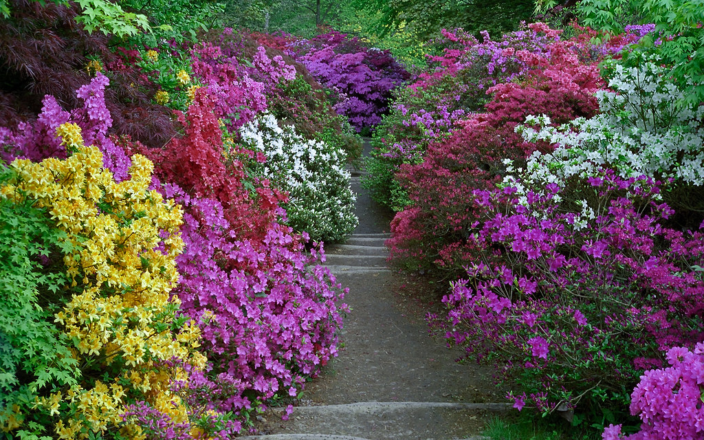 Leonardslee Gardens West Sussex Uk Vibrant Colors From Flickr