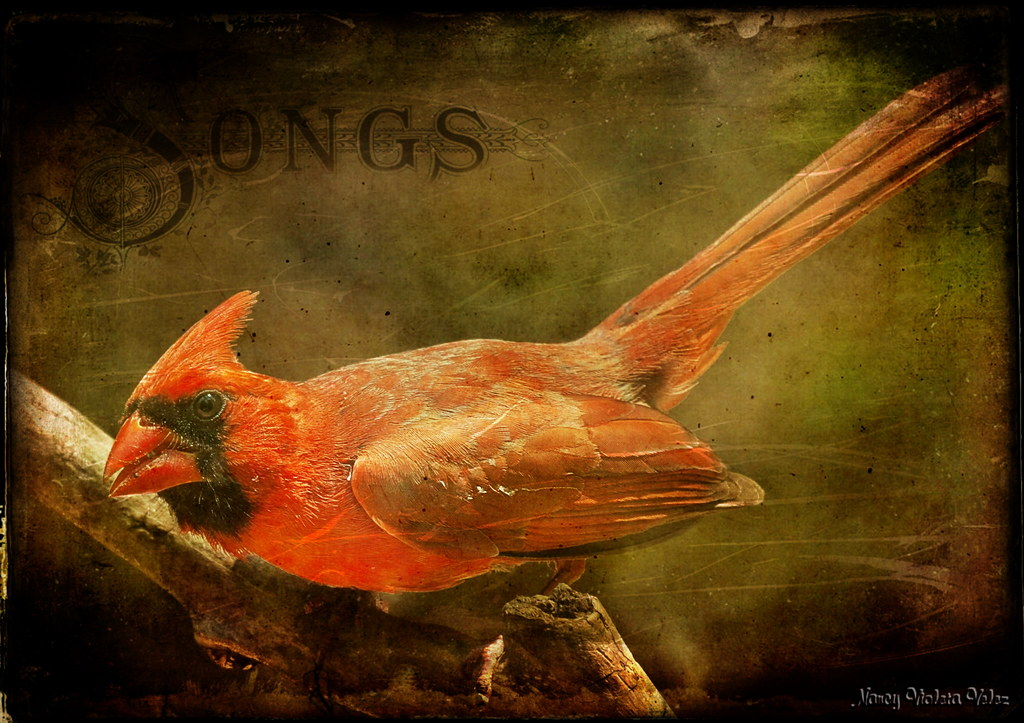 Suman's Cardinal in texture