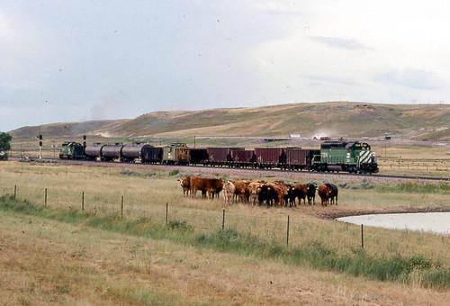railroad train cattle wyoming burlingtonnorthern moorcroft