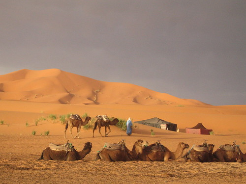 Early morning, Erg Chebbi | by Mary Loosemore