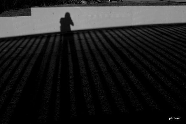 shadows no 65