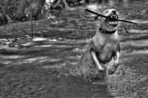 River Jock | by bobbychuck24