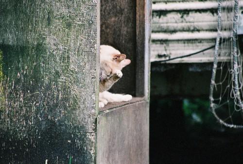 Washing at the Cat Condo by Chriss Pagani