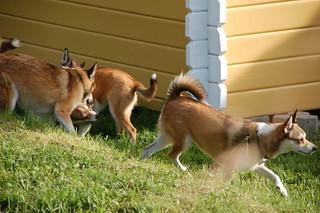 Gjengen leker i hagen