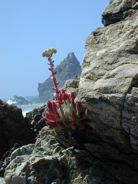Succulent at Cove
