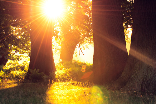 lighting morning trees light summer england sun nature misty fairytale forest sunrise landscape golden countryside kent woods nikon warmth ethereal flare sunrays wonderland storybook magical 70200 f28 enchanted d3