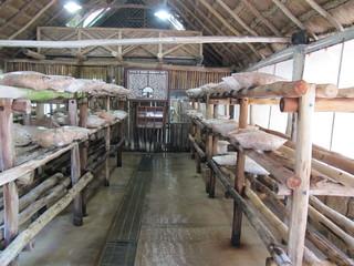 Mushroom farm at Xcaret | by wallygrom